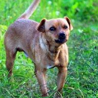 Осторожно, злой пёс! :-))) :: оля san-alondra