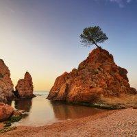 Дерево :: Юрий Кольцов