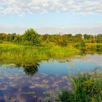 Вдоль по реке :: Юрий Стародубцев