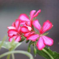 Цветочный хоровод-376. :: Руслан Грицунь