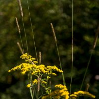 PA. Wildlife :: Irini Pasi