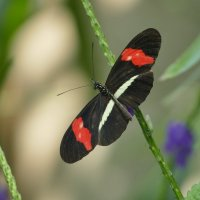 Моя первая бабочка на сайте фотокто... :: Юрий Поляков