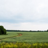 Старая дорога :: Александр Фищев