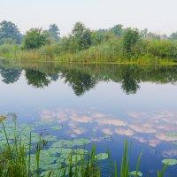 В реку смотрятся облака... :: Юрий Стародубцев