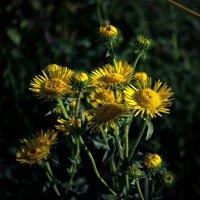 Цветы :: Валерий Чернов