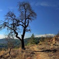 Природа отдыхает только зимой... :: Alex S.