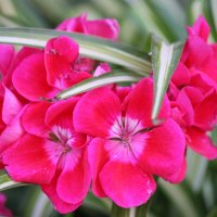 Цветочный хоровод-384. :: Руслан Грицунь