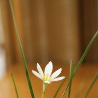 Цветочный хоровод-382. :: Руслан Грицунь