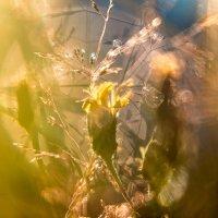 Немного солнца на память ... :: Вадим Белов