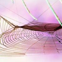 Розовый сон  паучка :: Alexander Andronik