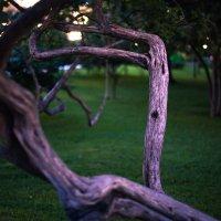 сухое дерево :: Олег