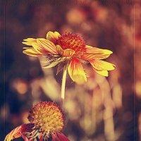 Цветное лето :: Татьяна Титова