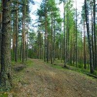 почти карельские леса... :: Михаил Жуковский