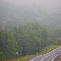 Июльский туман... :: Tatiana Markova
