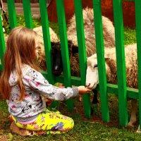 Дворовый зоопарк. :: Galina S*