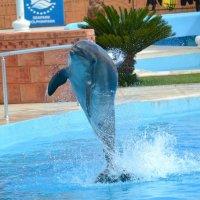дельфин :: Светлана Пантелеева