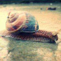 snail :: Katerina Sheglova