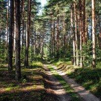 Лесными дорогами :: Андрей Зайцев