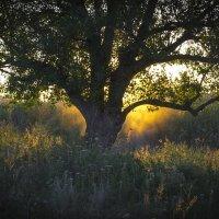 Ласковое солнце :: catonbox