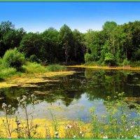 Заросший пруд :: Андрей Заломленков
