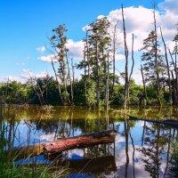Озеро :: ALLA Melnik