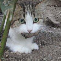 Модель: кошка Лиска :: Маруся Лунина
