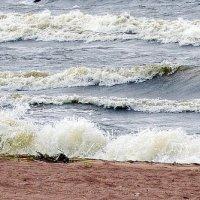 Берег Финского залива :: Надежда ---