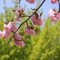 Цветочный хоровод-397. :: Руслан Грицунь