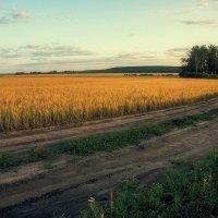 В поле :: Николай Алехин