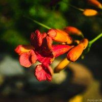 Цветы на набережной Геленджика :: Роман Безруков