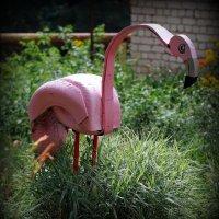 Фламинго :: Андрей Заломленков