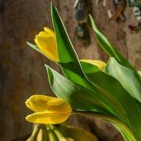 тюльпаны :: Михаил Даниловцев