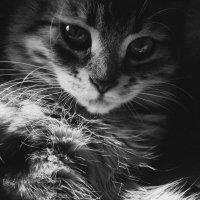 Котик :: Анастасия .