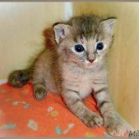 У нашей кошки родились крошки. Эх, посадить бы их на ладошку ... :: Людмила Богданова (Скачко)