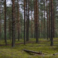 В лесу :: Галина Galyazlatotsvet