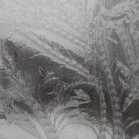 из серии: Мороз рисует :: Александр Школьник