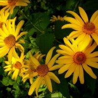 Веночек из цветов :: Татьяна Пальчикова