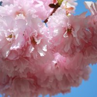 Цветочный хоровод-405. :: Руслан Грицунь