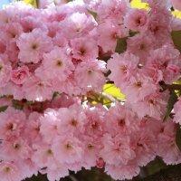 Цветочный хоровод-402. :: Руслан Грицунь