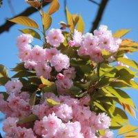 Цветочный хоровод-401. :: Руслан Грицунь