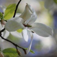 Цветочный хоровод-410. :: Руслан Грицунь