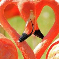 Розовое сердце фламинго :: Alexander