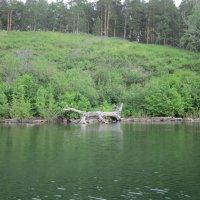 Зеленый берег :: Оксана Белова