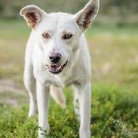 Собака-чужака по парку гуляка :: Михаил Кучеров