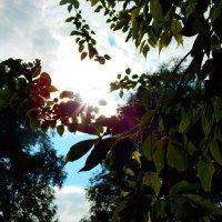 Блики заходящего солнца :: sonya gudkova