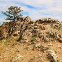 Дерево и камень :: ayouko111 .