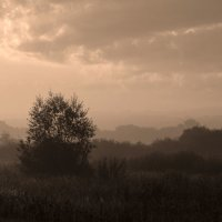 Туман :: Анна Харламова