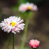 первые цветы :: Анна LyA