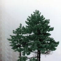 Туман :: Виктор Климов