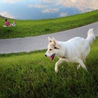 Чужая собака :: Александр Калинин